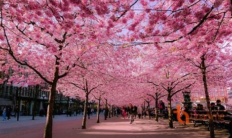 Khám phá vẻ đẹp bốn mùa ở Nhật Bản