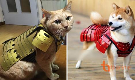 Oách xà lách với áo giáp samurai cho cún
