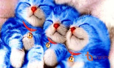 Khi mèo cũng lấn sân sang làng cosplay!