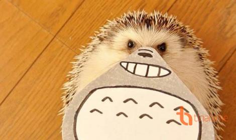 Gặp gỡ Marutaro - Chú nhím nổi tiếng nhất Nhật Bản