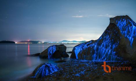 Bí ẩn bờ biển phát sáng kỳ lạ tại Nhật Bản!