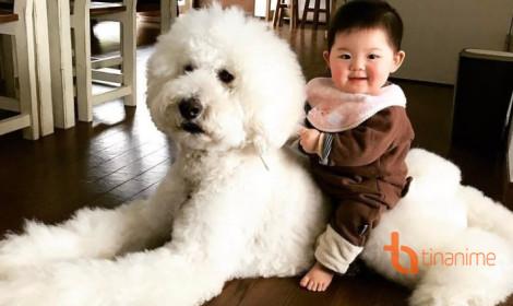Cô bé tí hon và người bạn lông xù khổng lồ!