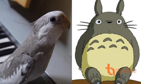 Chú vẹt cover ca khúc Totoro cực đáng yêu