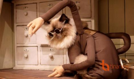 Khi các chú mèo lấn sân sang lĩnh vực cosplay
