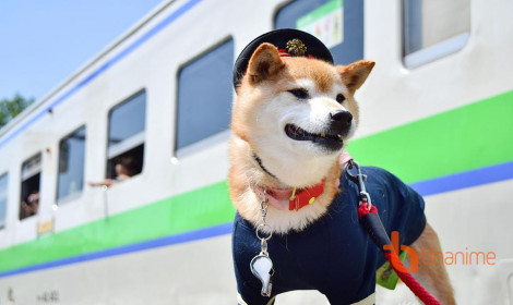 Khi đại boss là trưởng ga tàu tại Hokkaido!