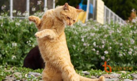 Tiêu rồi! Loài mèo sắp thống trị thế giới!