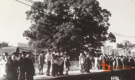 [Nhật Bản] Nhà ga gắn liền với cây long não 700 tuổi đầy bí ẩn