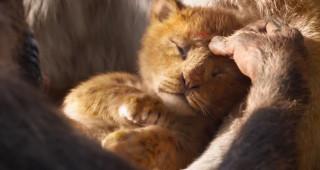 'The Lion King' 2019: Hành trình bi tráng và chân thực bật nhất