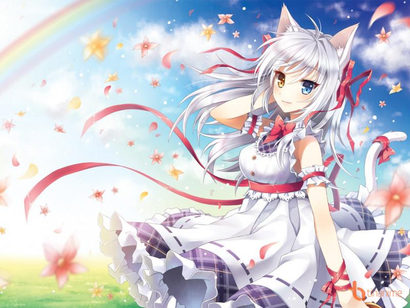 Những nàng mèo đáng yêu nhất thế giới!