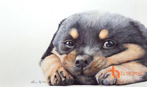 Bạn có tin những bức tranh này được vẽ bằng... bút bi?
