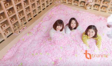 Đắm mình dưới hồ hoa anh đào - Chỉ có tại Nhật Bản
