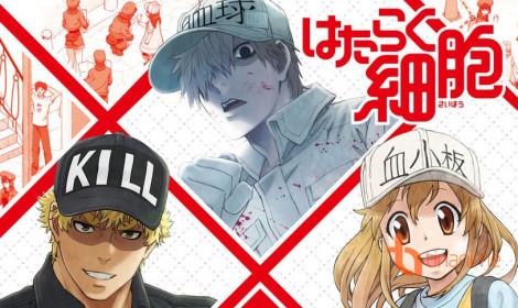 Hataraku Saibou ra mắt season 2! Sắp gặp lại Bạch Cầu siêu ngầu rồi!