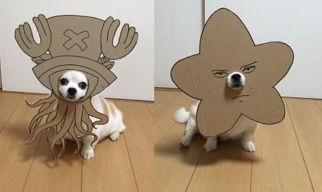Chú chó trở thành siêu sao cosplay bằng bìa giấy