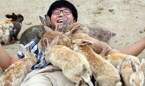 Đảo Thỏ - Điểm du lịch Nhật Bản không thể bỏ qua đối với người động vật